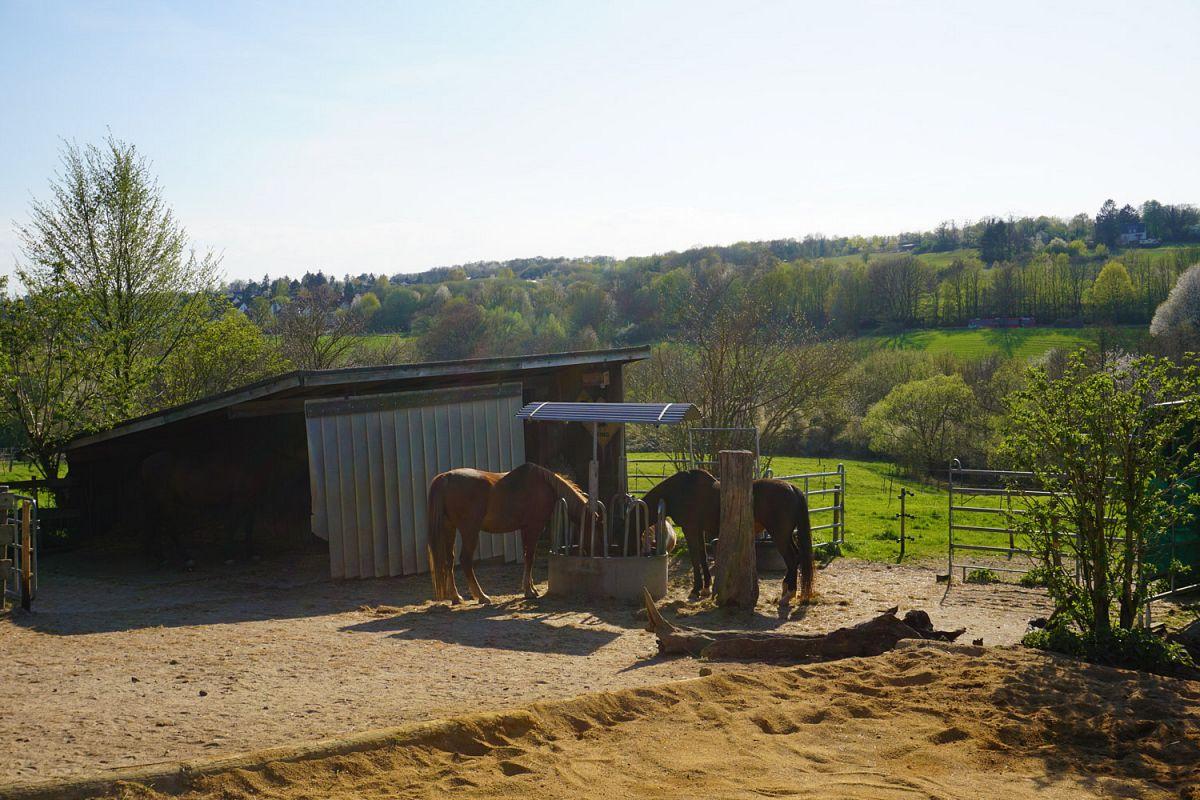 Am Pferdestall