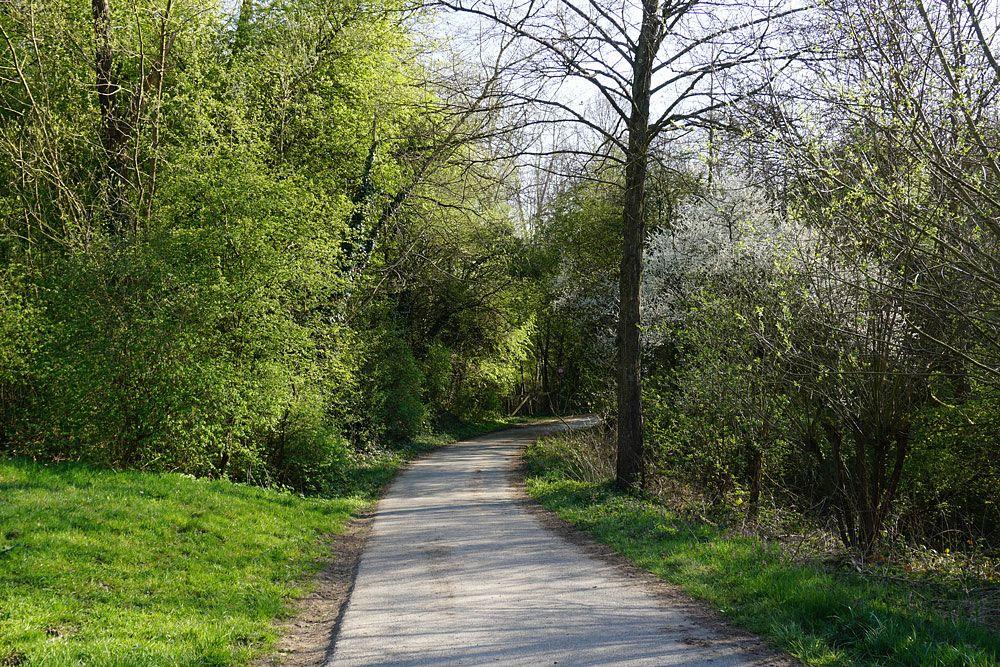 Der Feldweg führt ins Tal hinab.