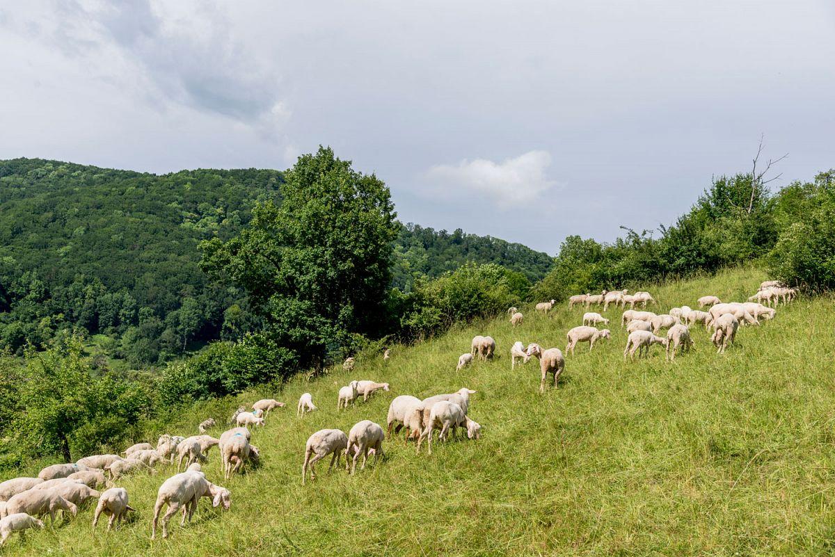 Vorbei an grasenden Schafen © TMBW, G. Lengler