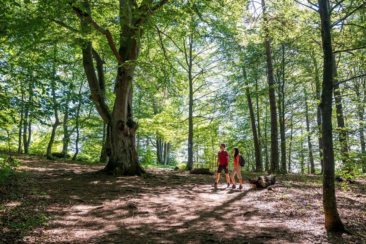 Auf Waldwegen unterwegs © TMBW, G. Lengler