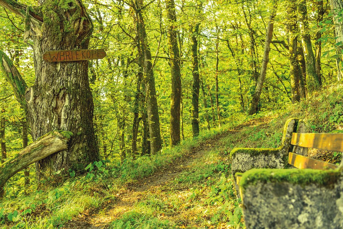 Waldpfad im Naturschutzgebiet Wartekopf © Pfalz.Touristik e.V.