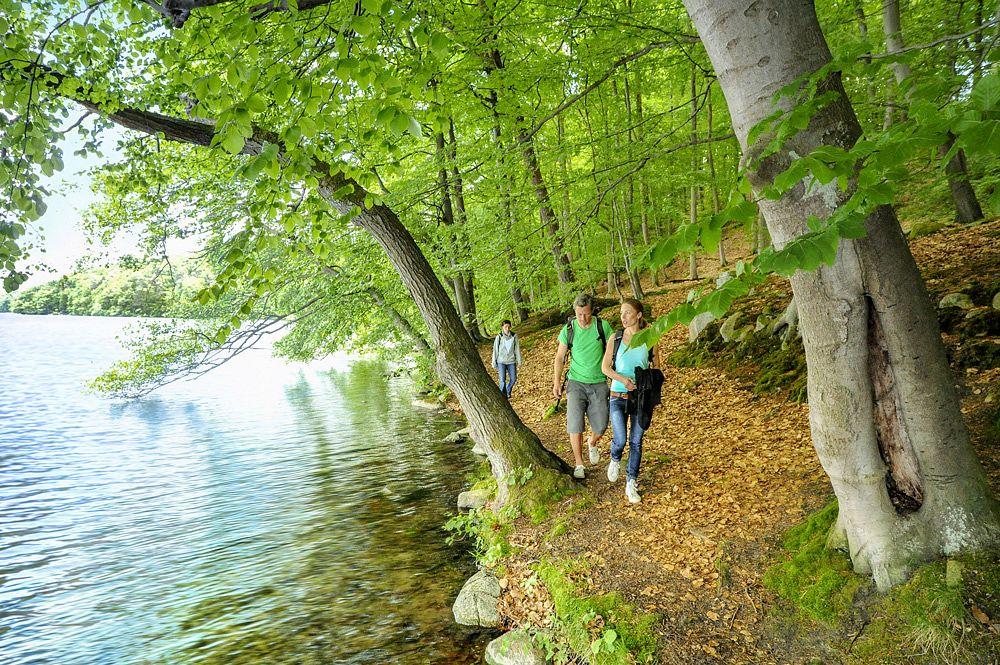 Lichter Uferwald © Tourismusverband Mecklenburg-Vorpommern/Duerst