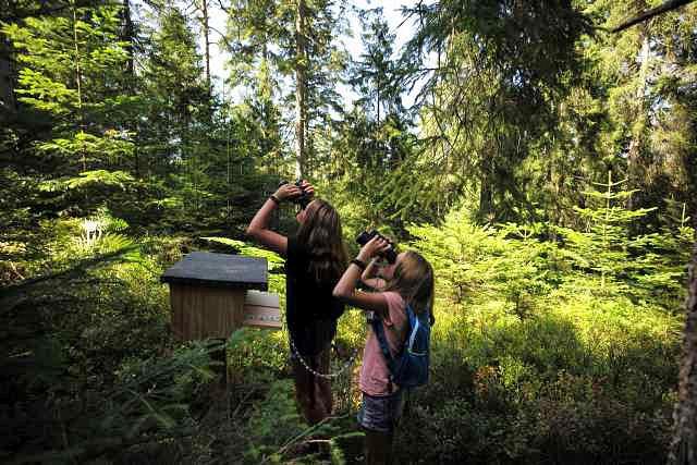 Auf der Suche nach dem Auerhahn © Infozentrum Kaltenbronn