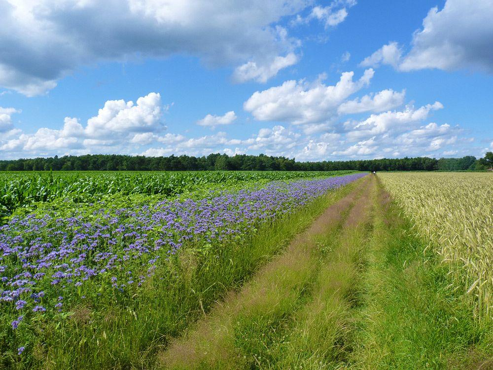 Idyllischer Wegabschnitt durch Wiesen und Felder auf dem Nordpfad Dör't Moor © TouROW/Udo Fischer