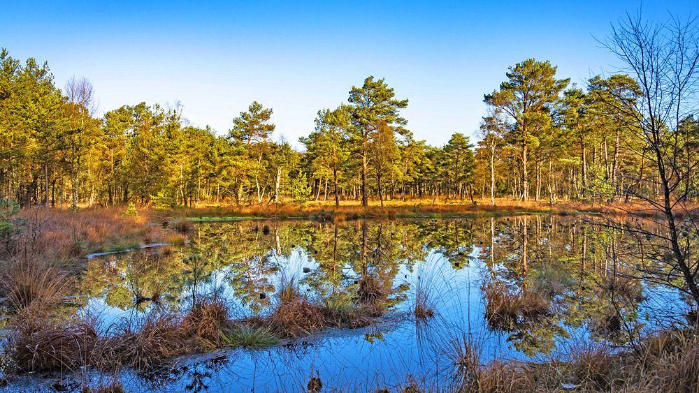 Ein Moorsee © BjörnWenglerFotografie