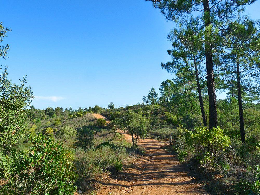 Auf Feldwegen geht es durch hügelige Buschlandschaften