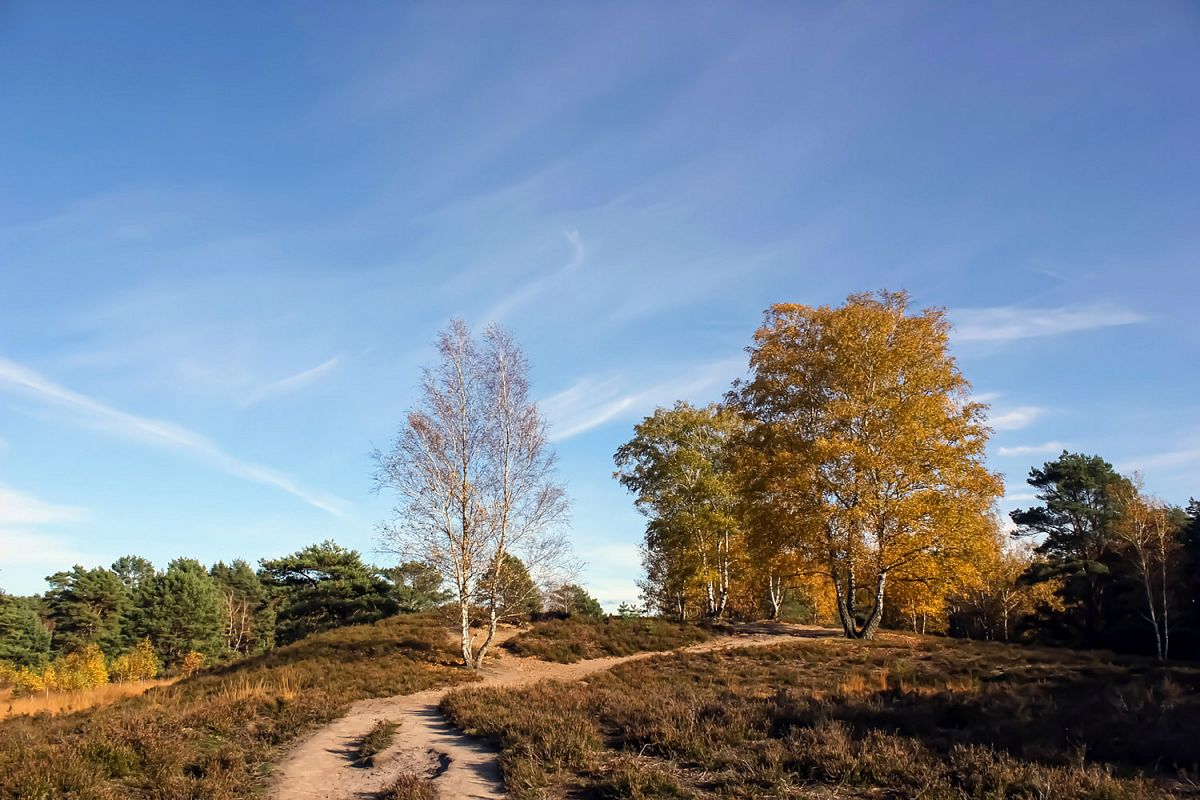 Die Gifhorner Heide im Herbst