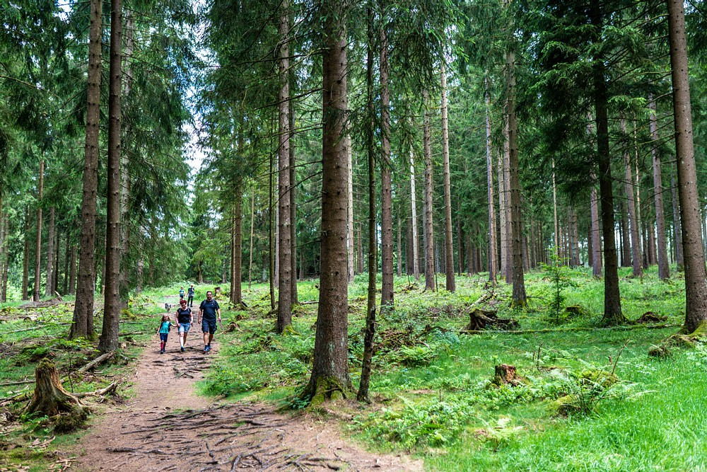 Im Wald bei Bad Laasphe © Michael Bahr, TVSW