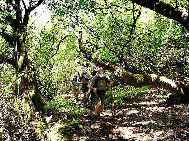Auf geführte Wanderungen die Besonderheiten der Insel erleben © picotours