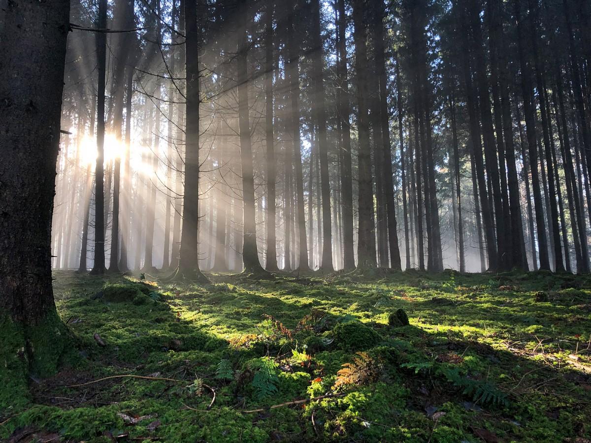Der Winter im NaturparkAugsburg - Westliche Wälder zaubertfantastische Lichtspiele.