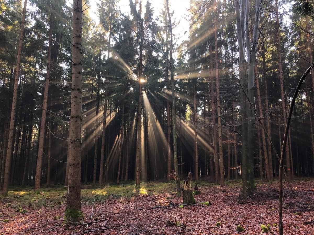 Voller Energie: Die durchdringendenStrahlen der Sonne gleichen einer Lichtexplosion.