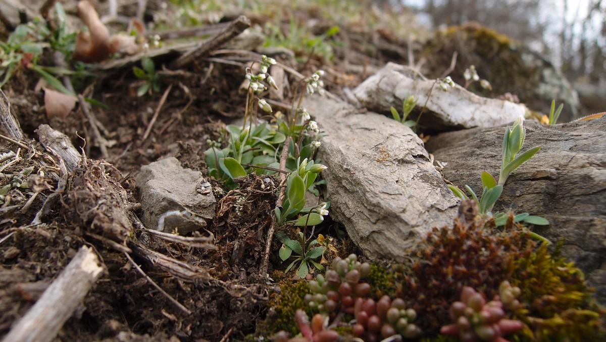 Botanische Besonderheiten in der Region © cult-touren