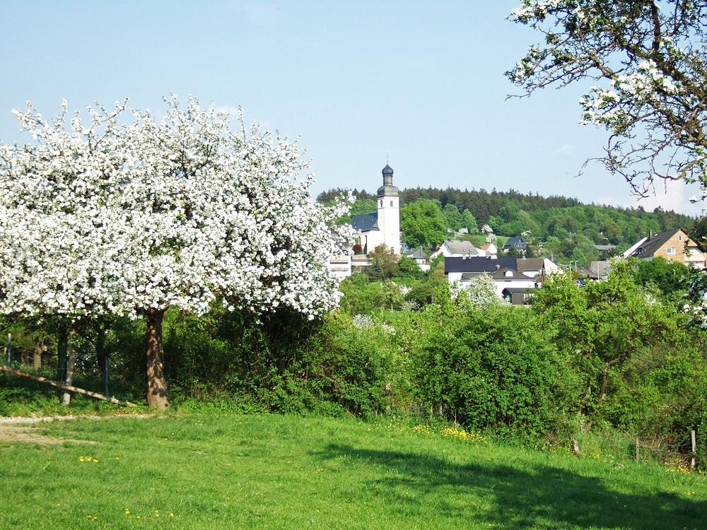 Frühlingsblüte in Haintchen