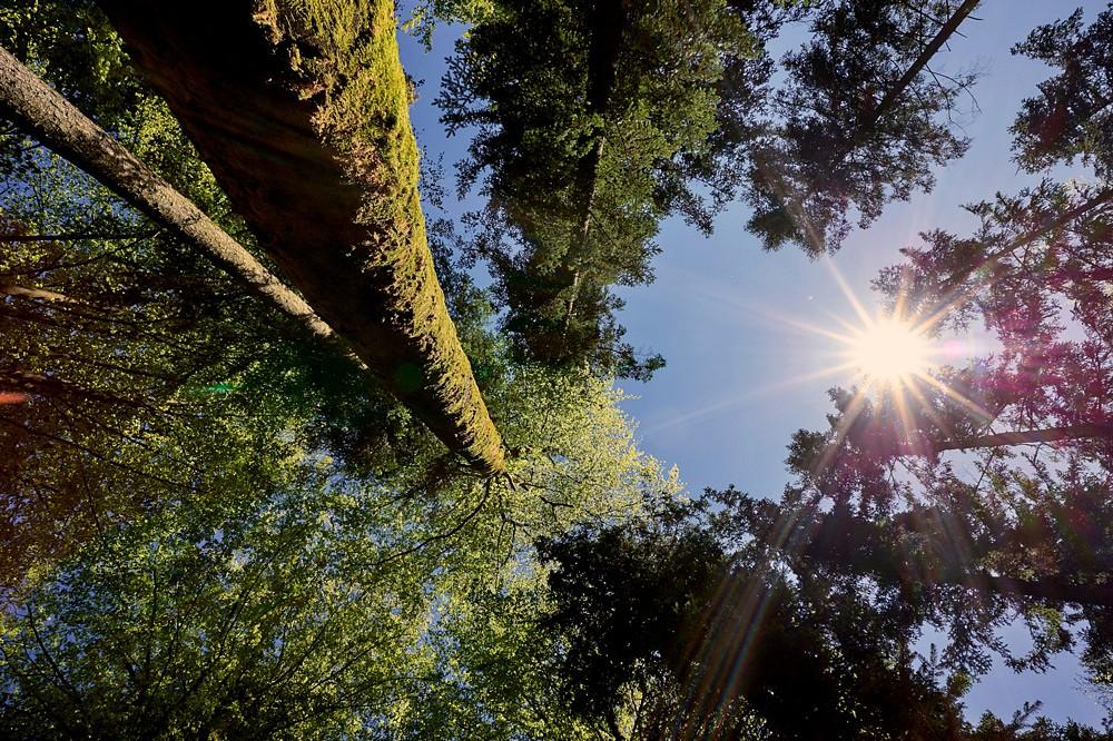 Der Bayer- und Böhmerwald glänzt mit waldreichen Perspektiven © Woidlife Photography