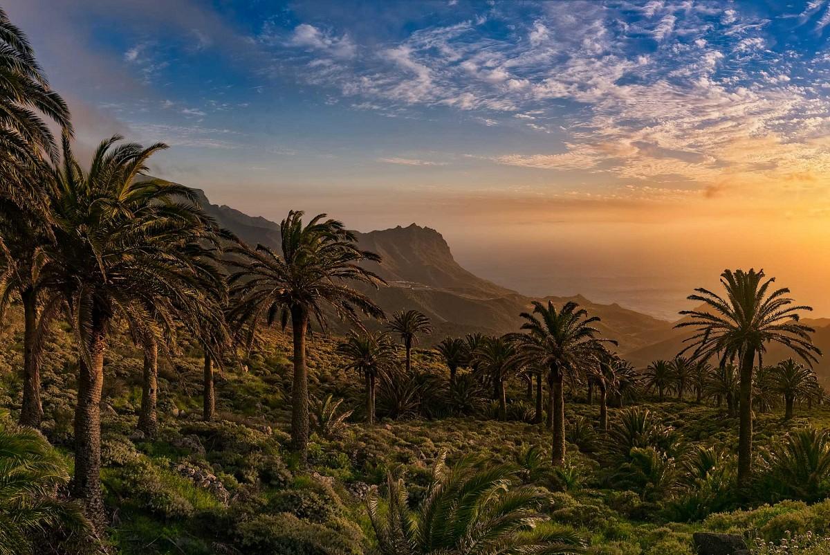 Palmenhain bei Tazo Nordwesten © Fremdenverkehrsamt La Gomera