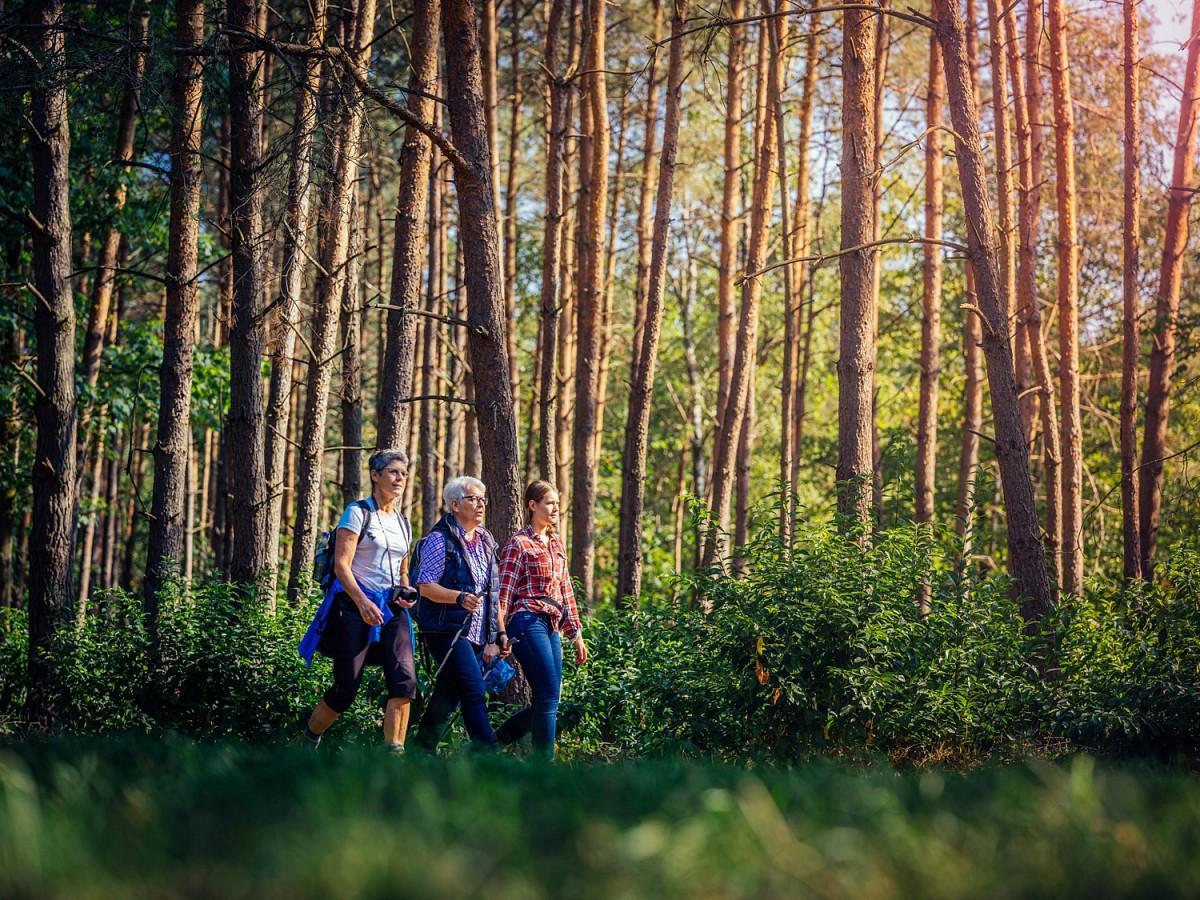 Gemeinsam durch den Kurwald © Bad Lippspringe, Foto besimmazhiq