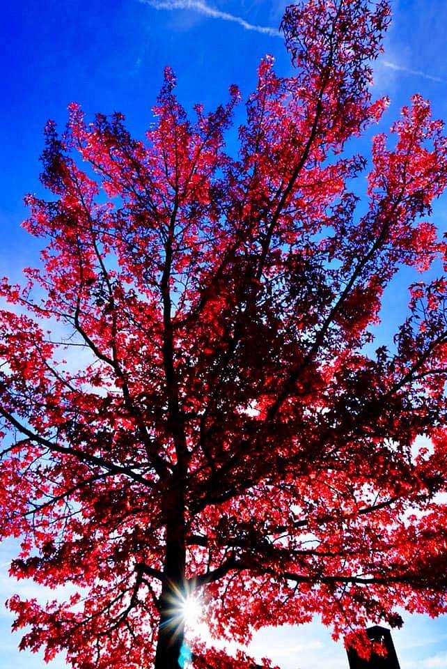 pspan-stylefont-familyGeorgiaserifDieser-traumhaft-schoumlne-Herbstbaum-ist-von-Facebook-User-Andreas-Koumlsternbspbr-aufgenommen-an-der-Urdenbacher-Kaumlmpe-bei-Duumlsseldorfspanp