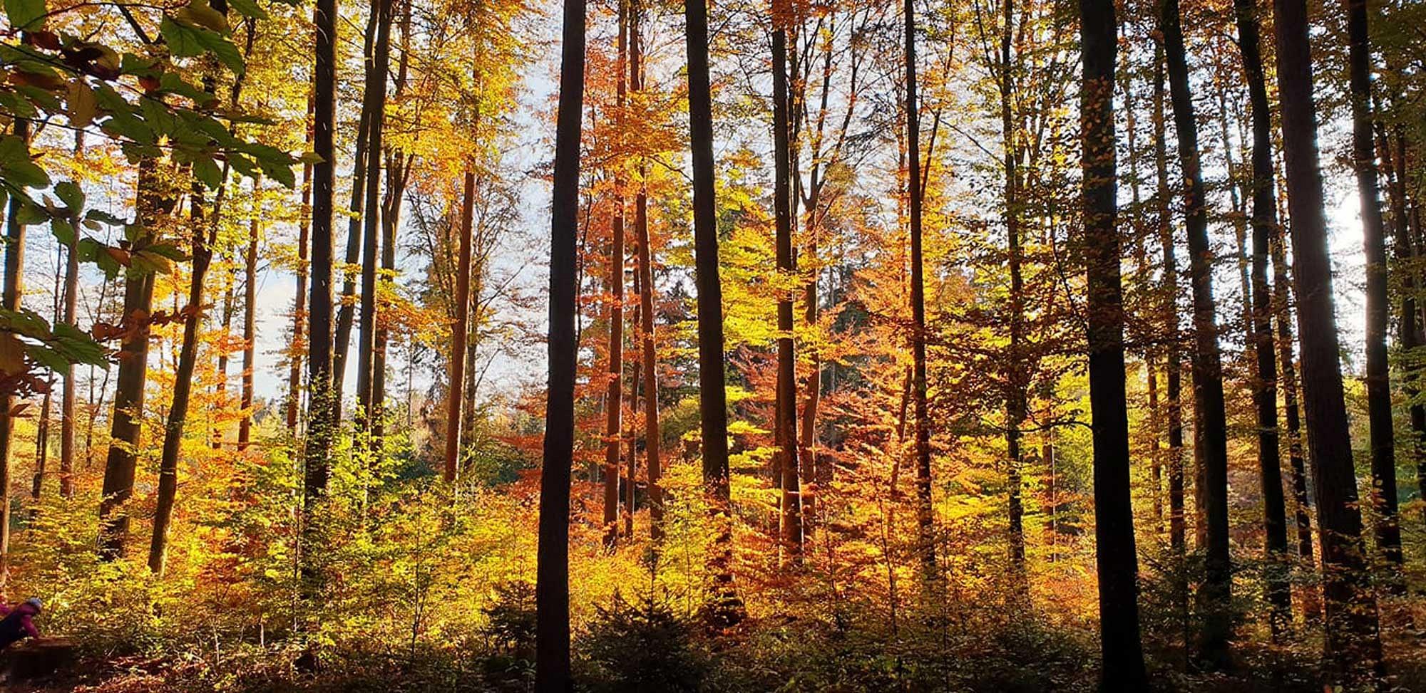 pspan-stylefont-familyGeorgiaserifEin-wunderschoumlnernbspHerbstwald---fotografiert-von-Facebook-Nutzerin-Katrin-Wycik-bei-einem-Spaziergang-mit-den-Kindern-im-Walderlebniszentrum-Schwernfeldspanp