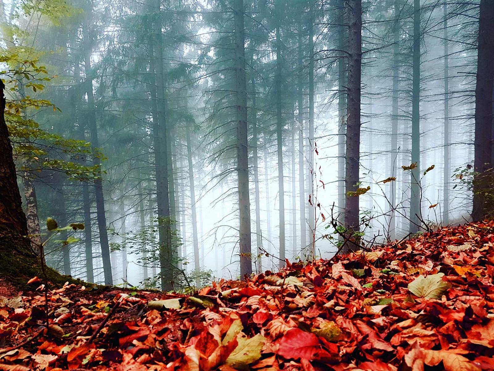 pspan-stylefont-familyGeorgiaserifManchmal-zeigt-der-Herbst-sich-auch-von-seiner-mystischen-Seite---so-wie-hier-im-Siebengebirge-fotografiert-von-Sarah-Simonspanp