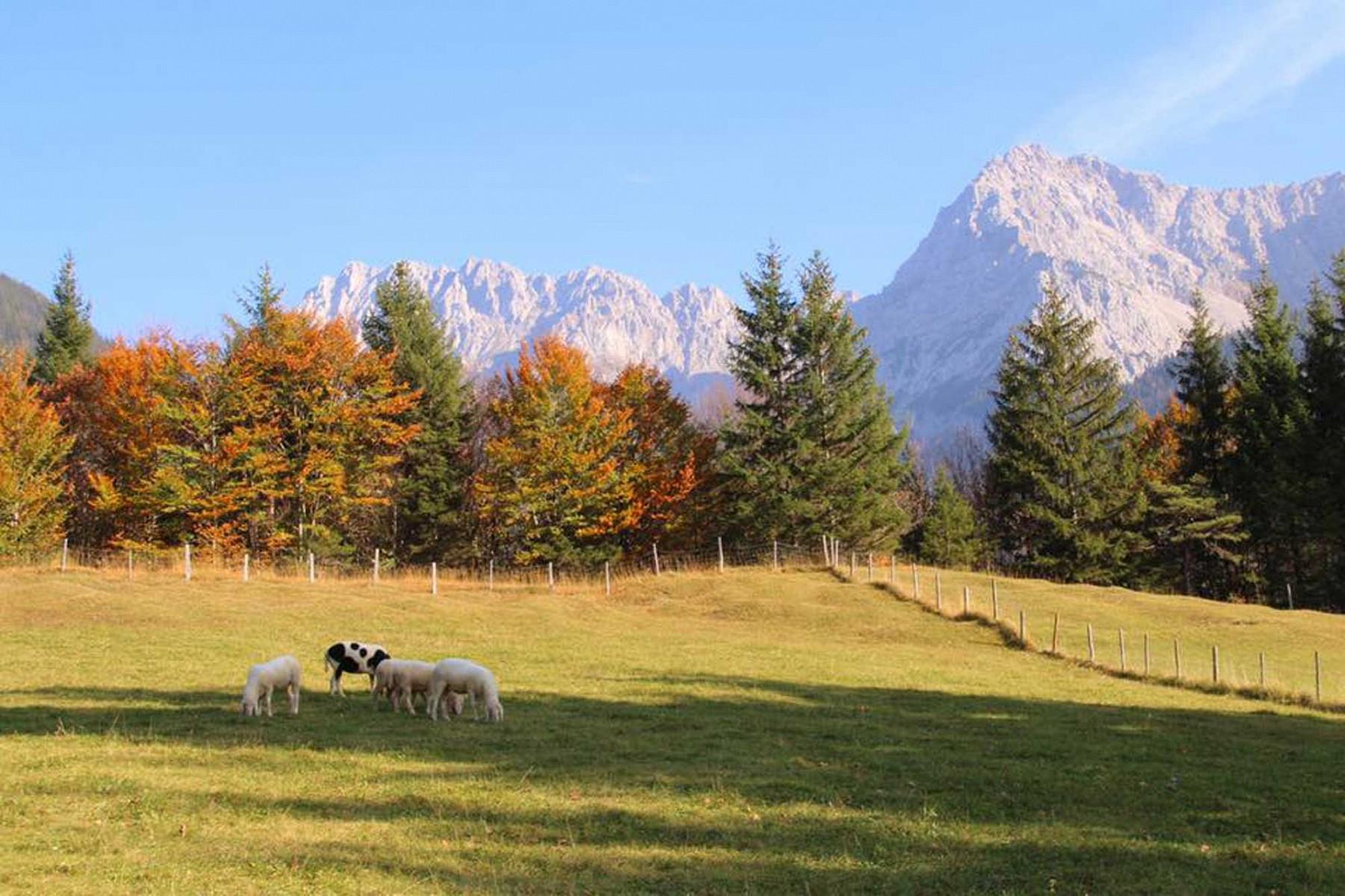pspan-stylefont-familyGeorgiaserifDieses-idyllische-Bild-zeigt-uns-den-Herbst-in-Garmisch-Partenkirchen-vor-einer-traumhaften-Bergkulisse---fotografiert-von-Stefanie-Jaklinspanp