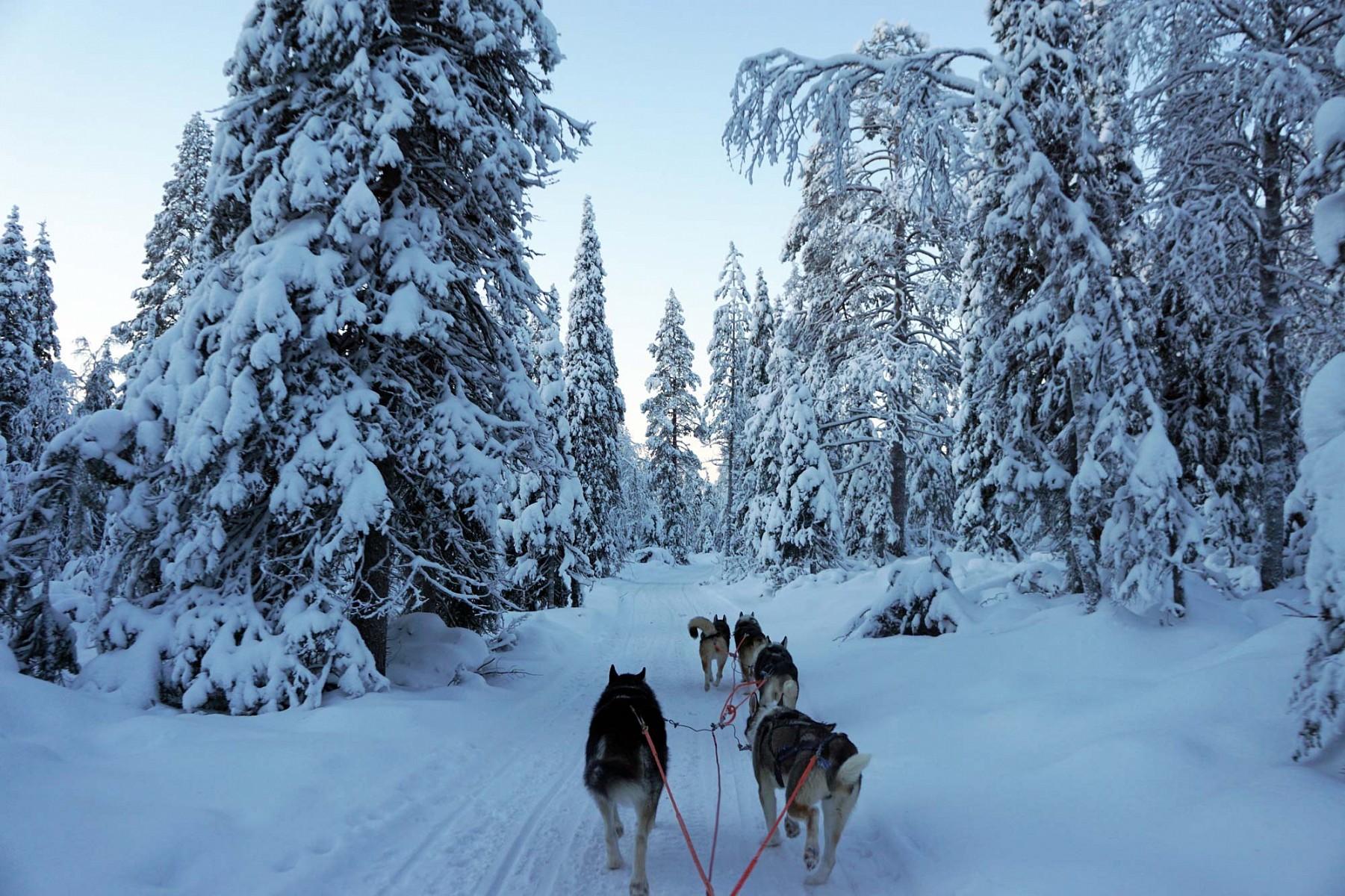 pWenn-man-in-Finnland-ist-darf-ein-Ausflug-mit-dem-Hundeschlitten-natuumlrlich-nicht-fehlennbspIn-einem-Naturpark-suumldoumlstlich-von-Ruka-liegt-das-Cafeacute-Lammintupa-Von-hier-ausnbspgibt-es-eine-kurze-Rundfahrt-mit-dem-HuskyschlittenppquotQuirlig-und-doch-ruhig-zugleich-werden-wir-durch-die-weiszlige-Landschaft-gezogenquotp