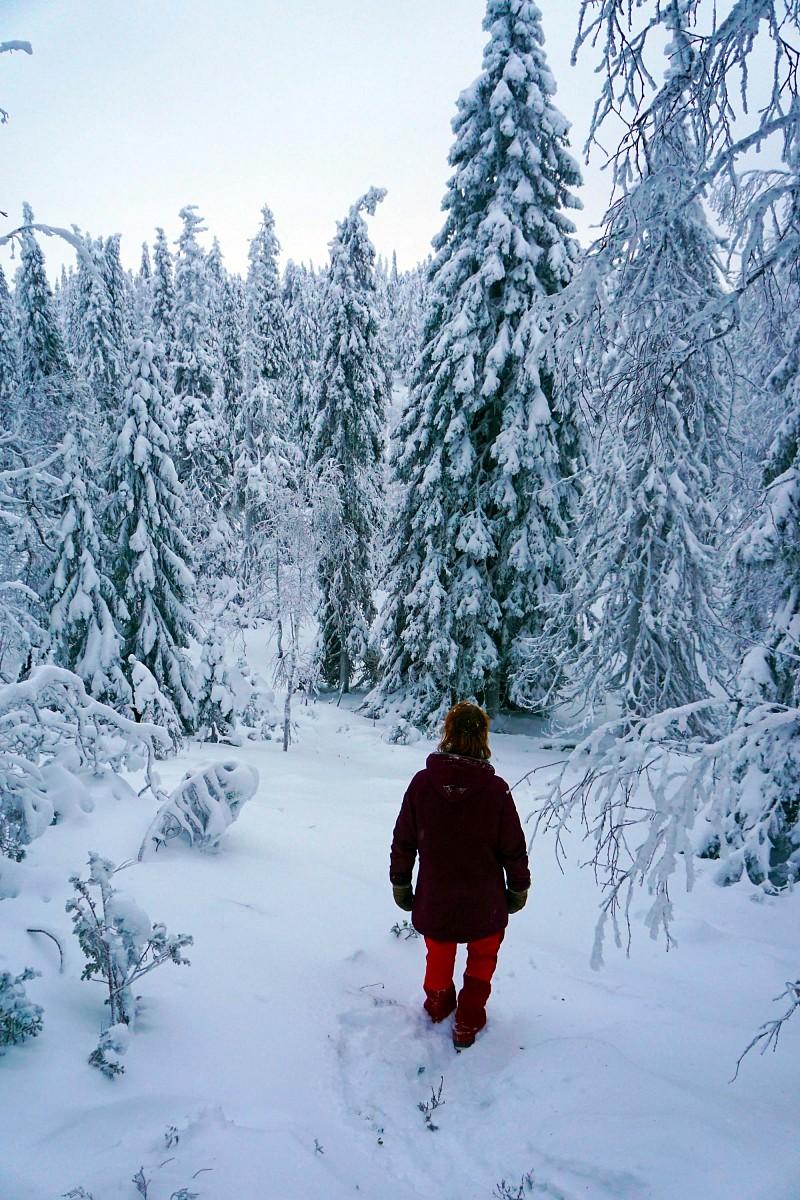 pDie-Winterreise-durch-Finnland-geht-zu-Ende-und-am-letzten-TagnbspgelangtnbspHanna-per-Zufall-auf-den-Baumlren-Pfadnbspder-steiler-als-erwartet-hinauf-auf-eine-der-wenigen-Erhebungen-rundnbspum-Ruka-fuumlhrtppquotAn-der-Spitze-gelangen-wir-auf-eine-Lichtung---und-ploumltzlich-ist-kein-Weg-mehr-zu-sehen-Heute-scheint-hier-noch-keiner-lang-gelaufen-zu-sein-uns-zur-Freudequotnbspp