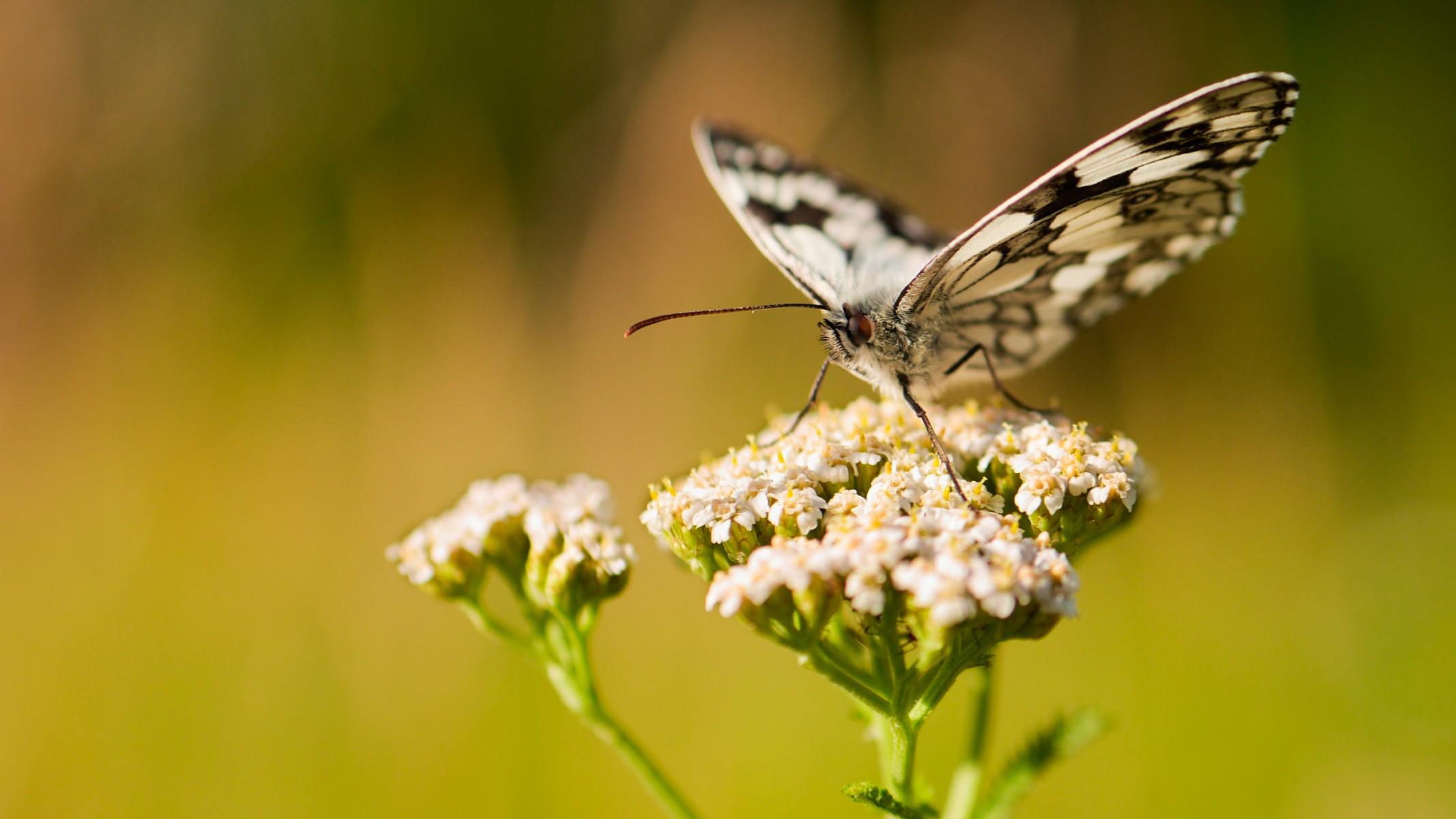 pDer-Schachbrettfalter-ist-Schmetterling-des-Jahres-2019nbspAls-Oumlkologe-und-Naturfilmer-versteht-David-Cebulla-seine-Arbeit-auch-als-Beitrag-zur-Umweltbildungp
