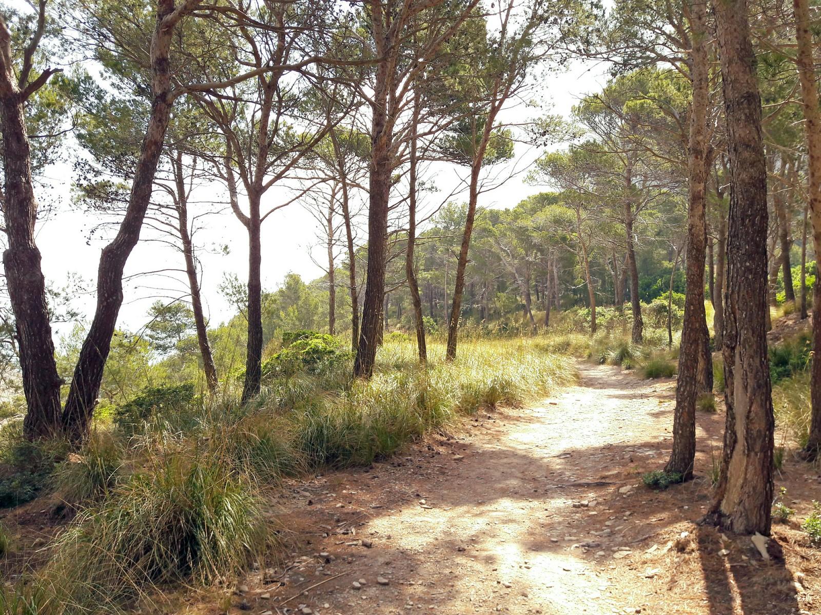 pAn-der-Haltestelle-Cala-Murta-steige-ich-ausnbspViele-Mitfahrer-machen-sich-auf-den-Weg-hinunter-zur-Bucht-Ich-nehme-einen-Pfad-auf-der-anderen-Straszligenseite-zur-Cala-Figuerap