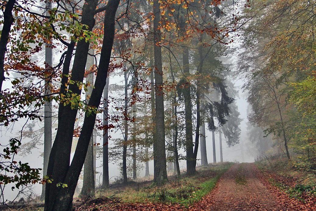 pspan-stylefont-familyTahomaGenevasans-serifAuch-im-Nebel-weiszlig-der-Wald-mit-seiner-ganz-eigenen-mystischen-Stimmung-zu-beeindrucken-hier-im-Taunusbr-copy-Lilli-Foumlrsterspanp