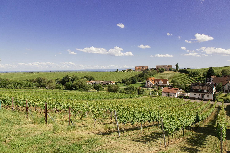 pAussichtreiche-Touren-z-B-vom-Weinanbau-gepraumlgt-laden-ein-zum-ganzjaumlhrigen-Genusswandernp
