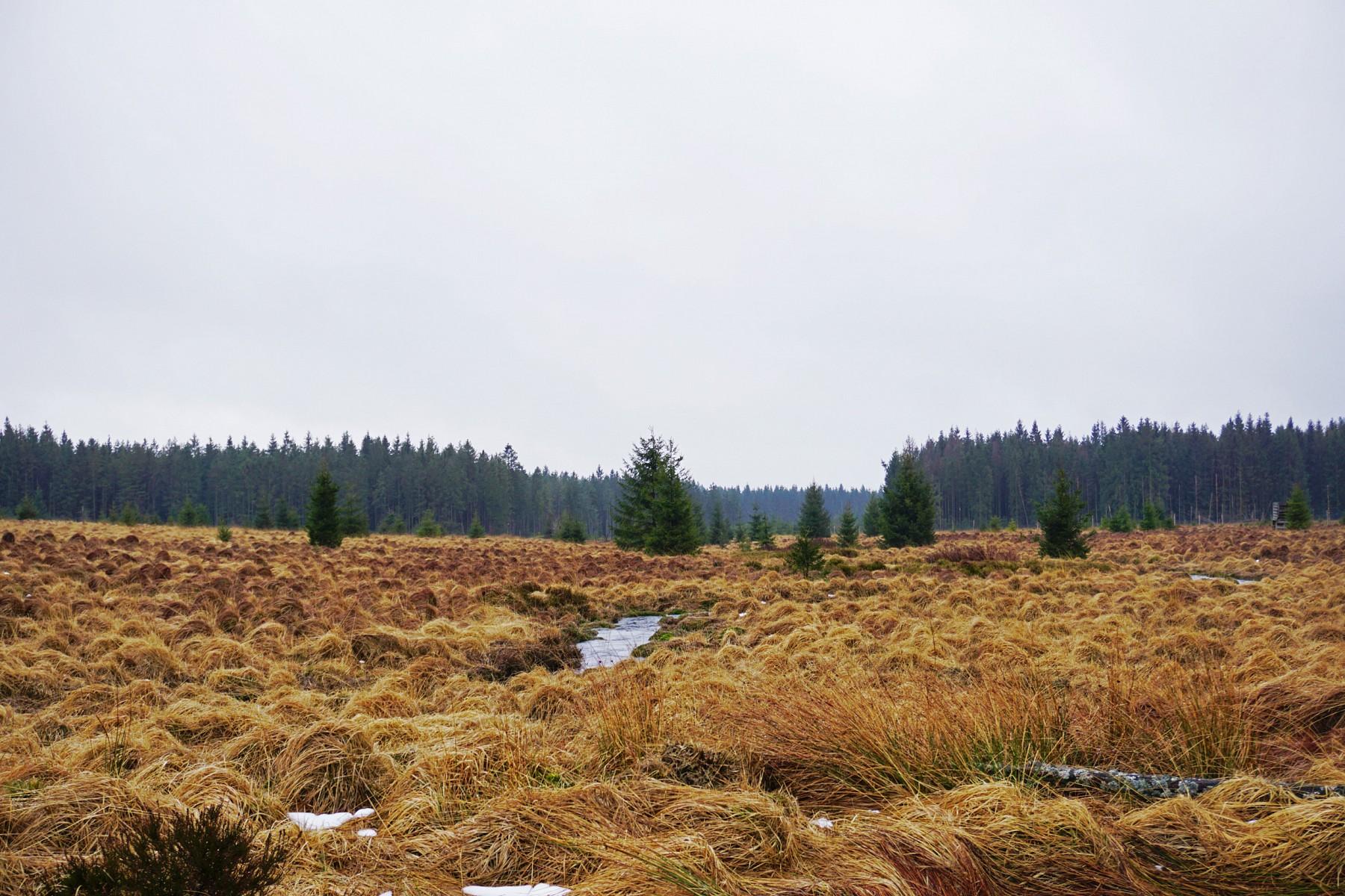 pMeine-Wanderung-im-Maumlrz-2020-entlang-der-25-km-langen-Hillnbspwurde-etwas-abenteuerlicher-als-geplant-Als-ich-am-Morgen-losging-war-das-Hochmoor-in-graue-Wolken-gehuumllltbr-Alle-Fotos-copy-Svenja-Walterp