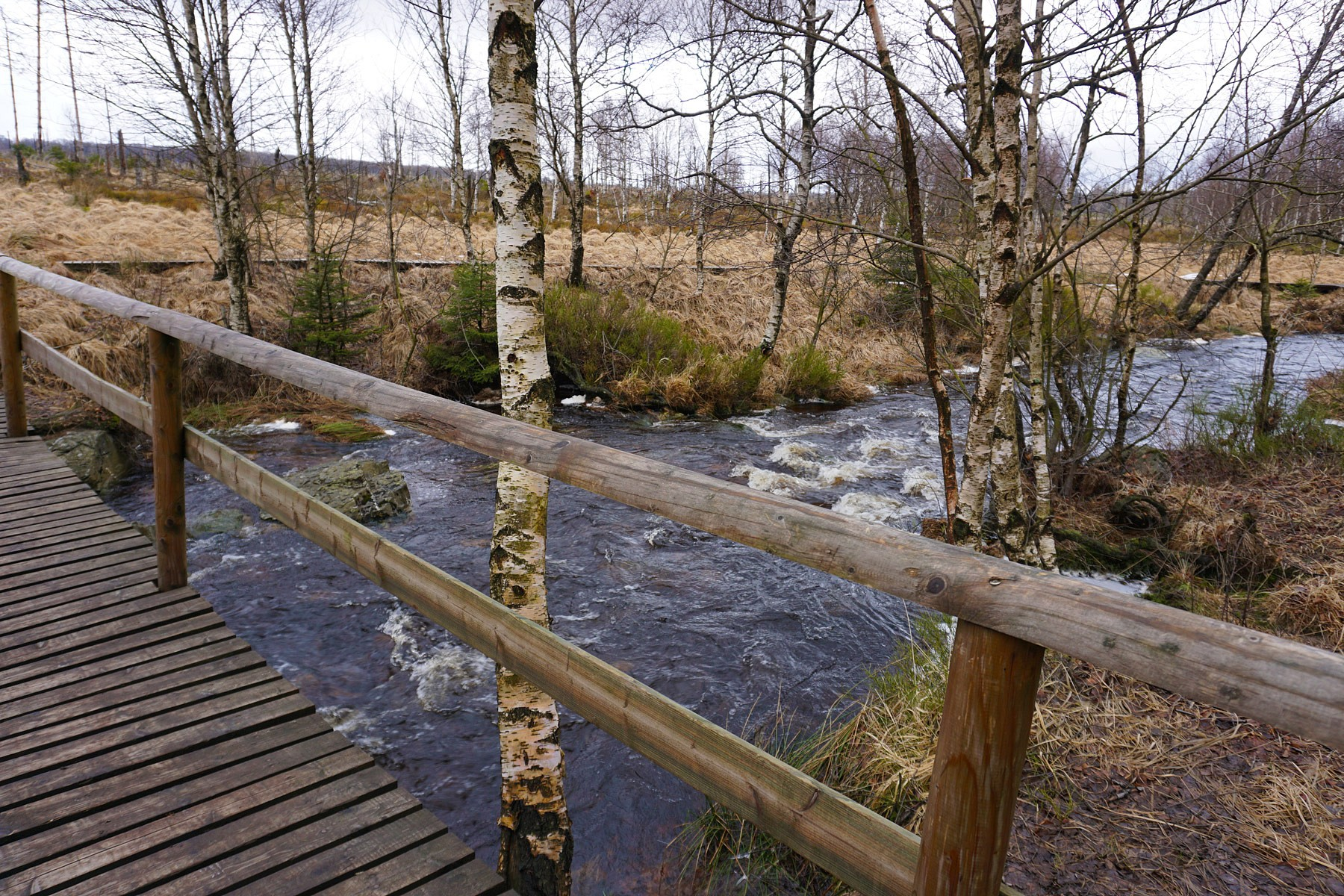 pNach-ca-5-km-erreiche-ich-dienbspHill-die-zu-einem-fast-wilden-Fluss-geworden-ist-Sie-wird-von-nun-an-meine-einzige-Wegbegleiterin-seinnbspp