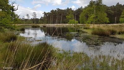 Heidemoor und Teich
