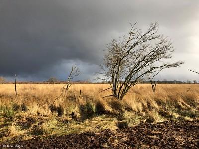 Das Moor Bargerveen