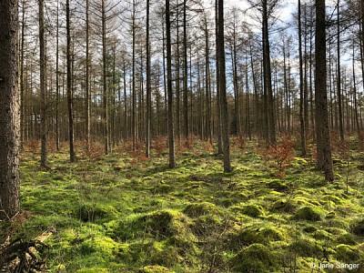 Moosbedeckter Wald