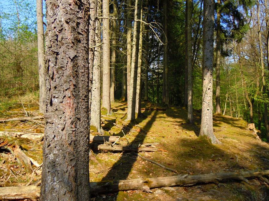 Im Schönbuch, Blick in den Wald
