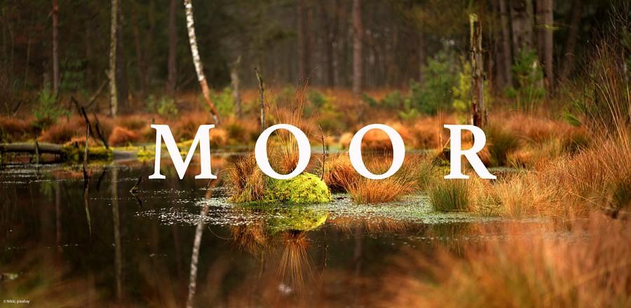 Moorlandschaft