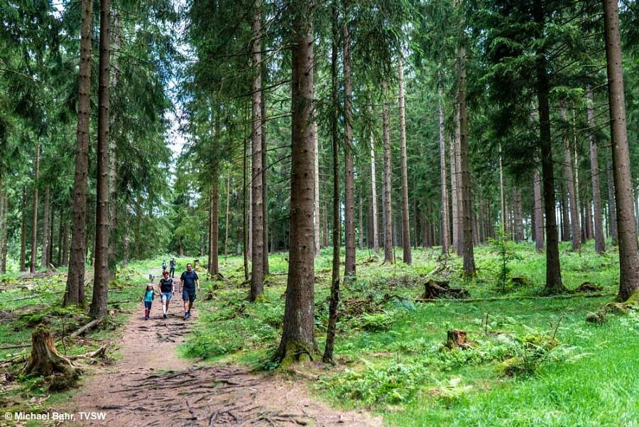 Wurzeliger Waldwege im Rothaargebirge