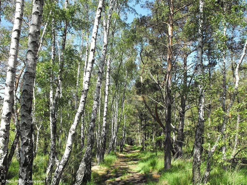Küstenwald bei Ribnitz-Damgarten